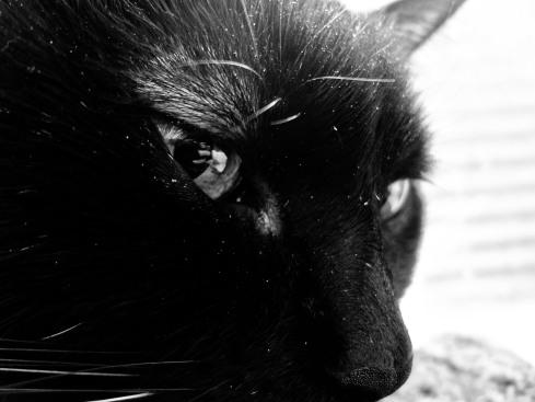 Black white day 4